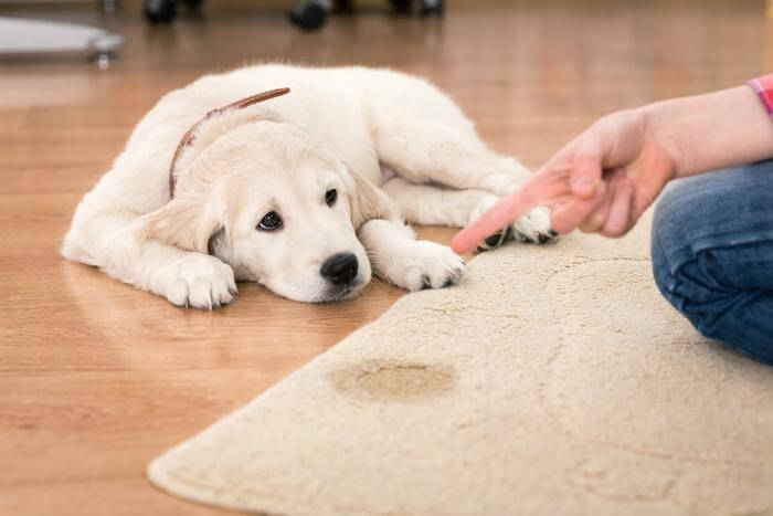 healthy and smelling fresh when pet accidents occur, Carpet Cleaner